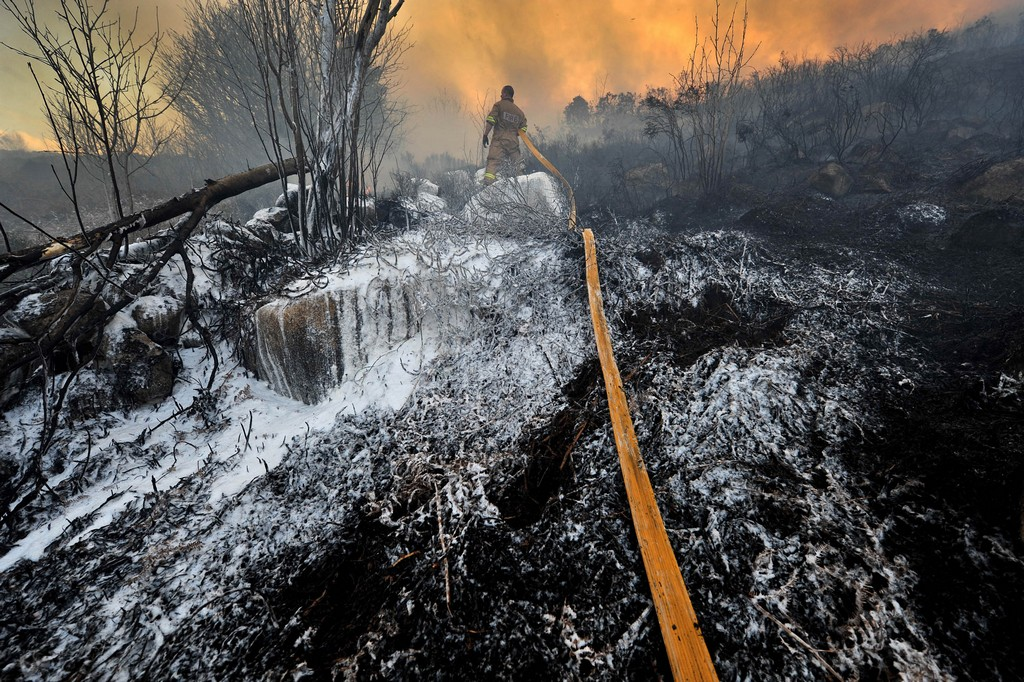 Burnt forest after wildfire